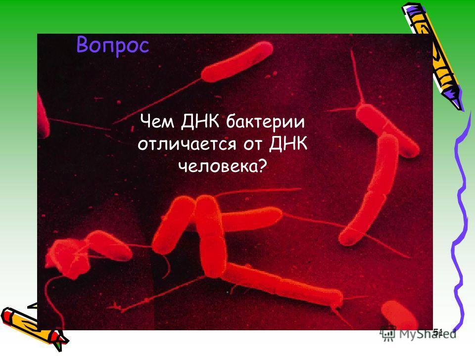 51 Вопрос Чем ДНК бактерии отличается от ДНК человека?
