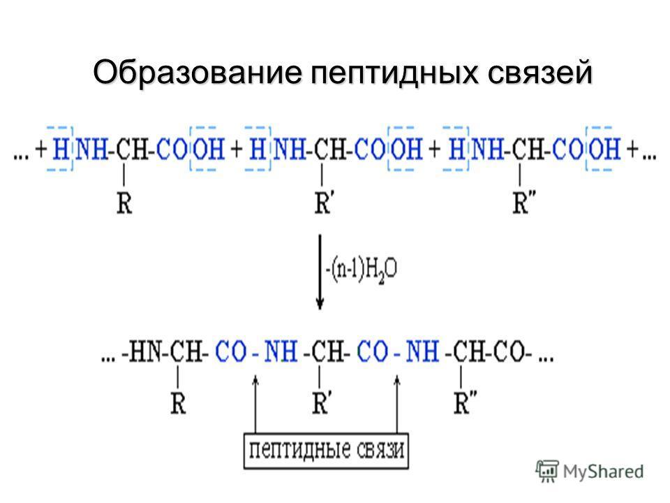 Общая формула аминокислот R O R O             NH 2 -CH-C –OH Какие группы входят в состав аминокислот?Какие группы входят в состав аминокислот? аминогруппа Карбоксильная группа