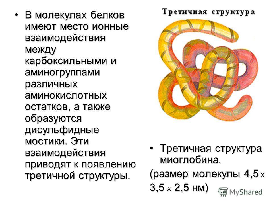 Для белковых тел характерны Для белковых тел характерны огромные молекулярные массы. огромные молекулярные массы. У вируса желтухи шелко- У вируса желтухи шелко- вичного червя М r = 916000000 вичного червя М r = 916000000 Отсюда и почти макроразме- О