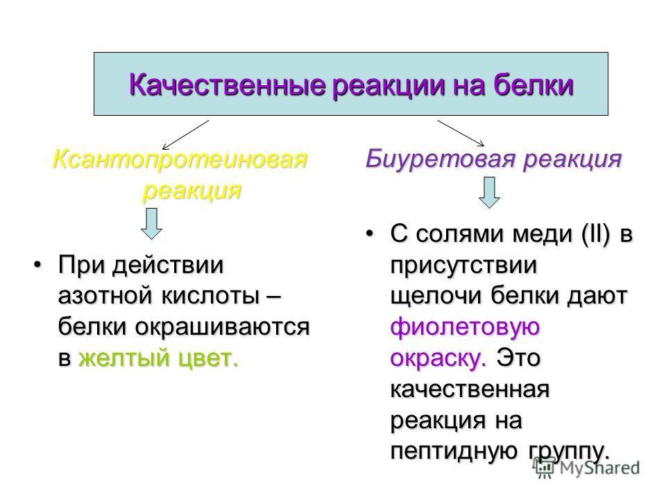 Форма молекул определяет их растворимость в воде Белки Белки Примеры Примеры Фибриллярные (нераствори- мые) Кератин – в коже,ногтях, волосах Коллаген – в сухожилиях Миозин – в мускулах Фиброин – в шелке Глобулярные(растворимые) Все ферменты Многие го