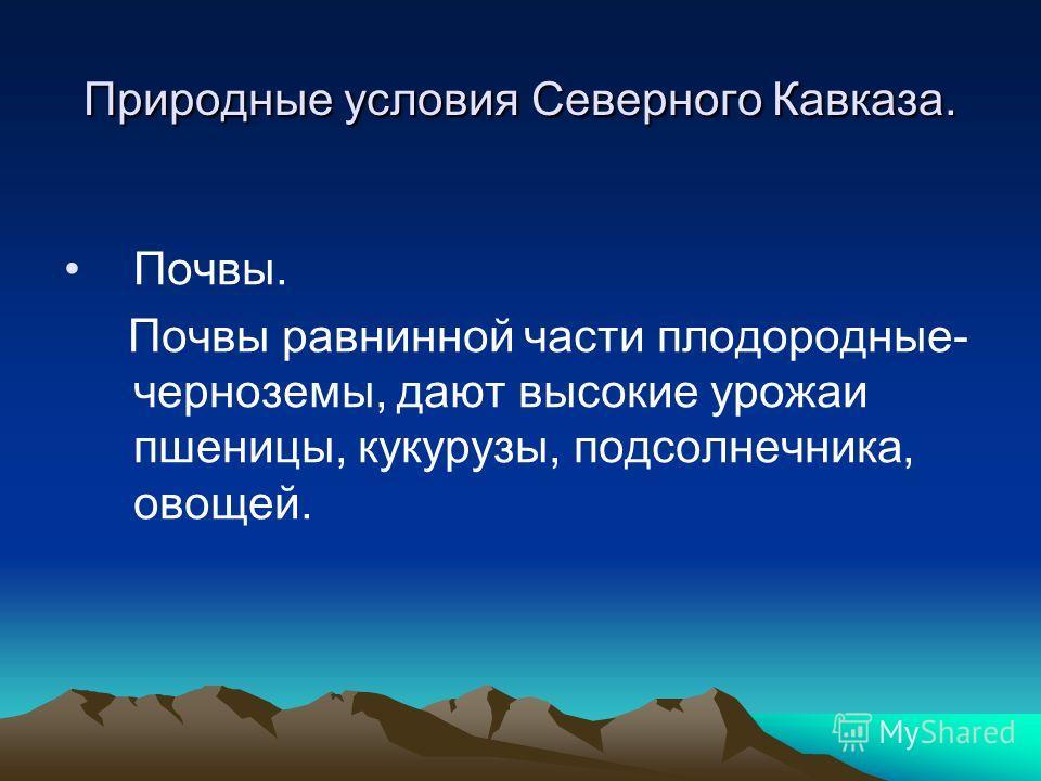 Природные условия Северного Кавказа. Почвы. Почвы равнинной части плодородные- черноземы, дают высокие урожаи пшеницы, кукурузы, подсолнечника, овощей.