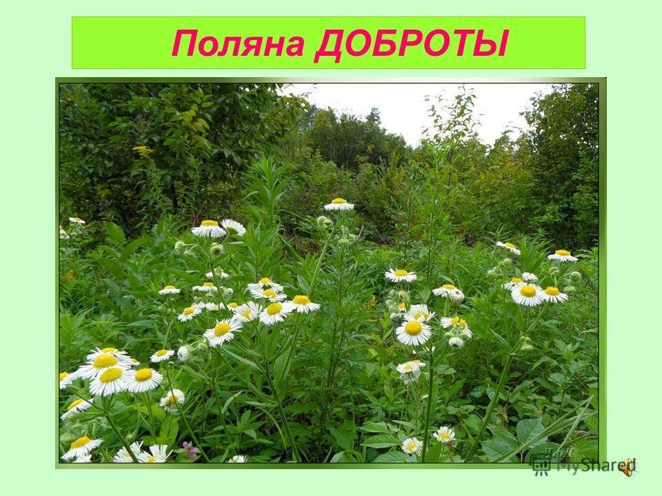 Поляна ДОБРОТЫ