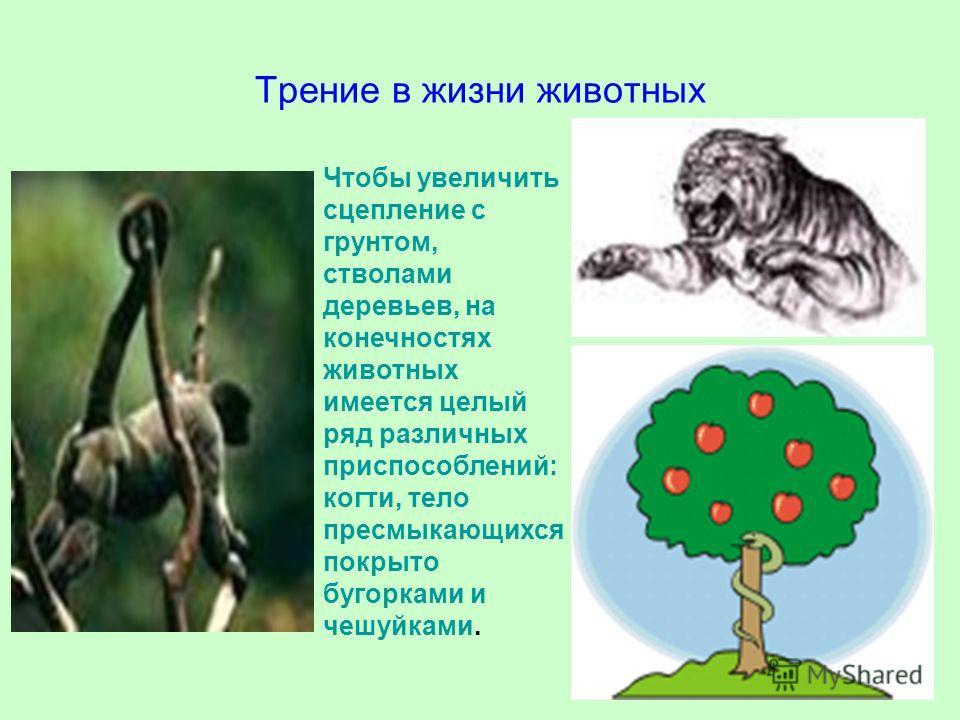 Чтобы увеличить сцепление с грунтом, стволами деревьев, на конечностях животных имеется целый ряд различных приспособлений: когти, тело пресмыкающихся покрыто бугорками и чешуйками. Трение в жизни животных