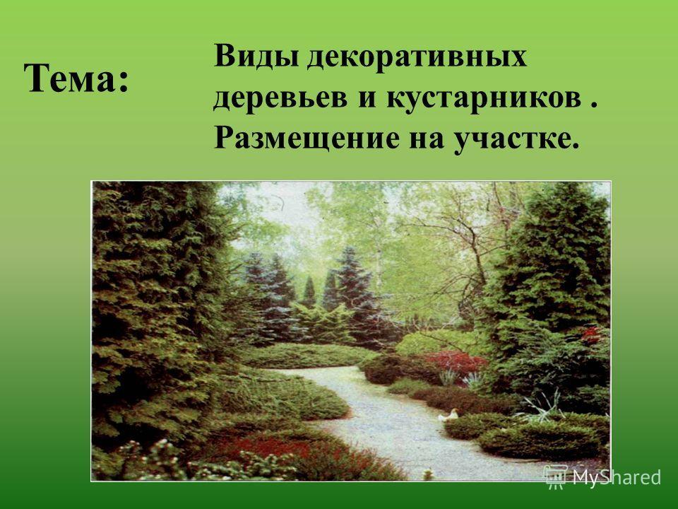 Виды декоративных деревьев и кустарников. Размещение на участке. Тема: