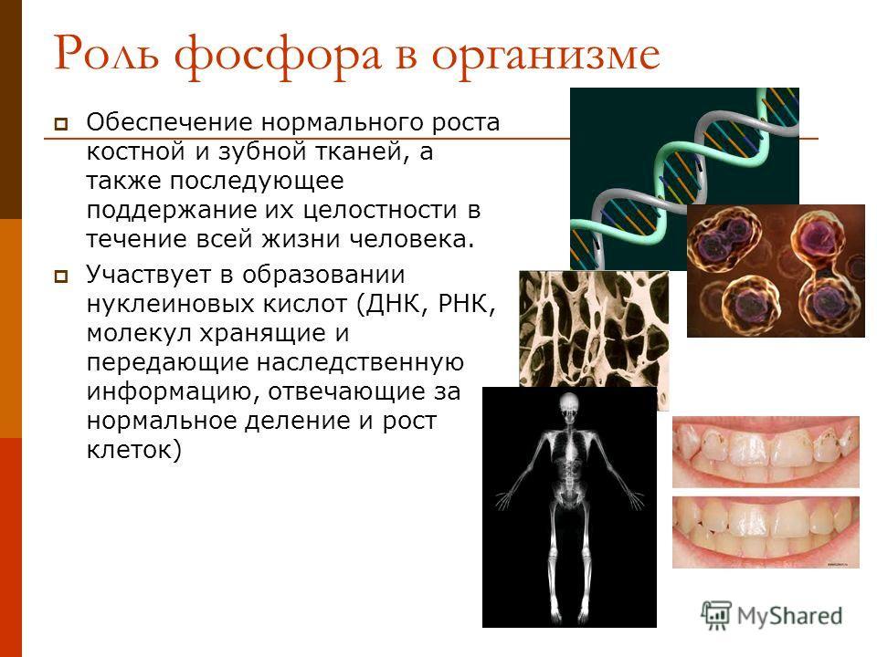 Роль фосфора в организме Обеспечение нормального роста костной и зубной тканей, а также последующее поддержание их целостности в течение всей жизни человека. Участвует в образовании нуклеиновых кислот (ДНК, РНК, молекул хранящие и передающие наследст
