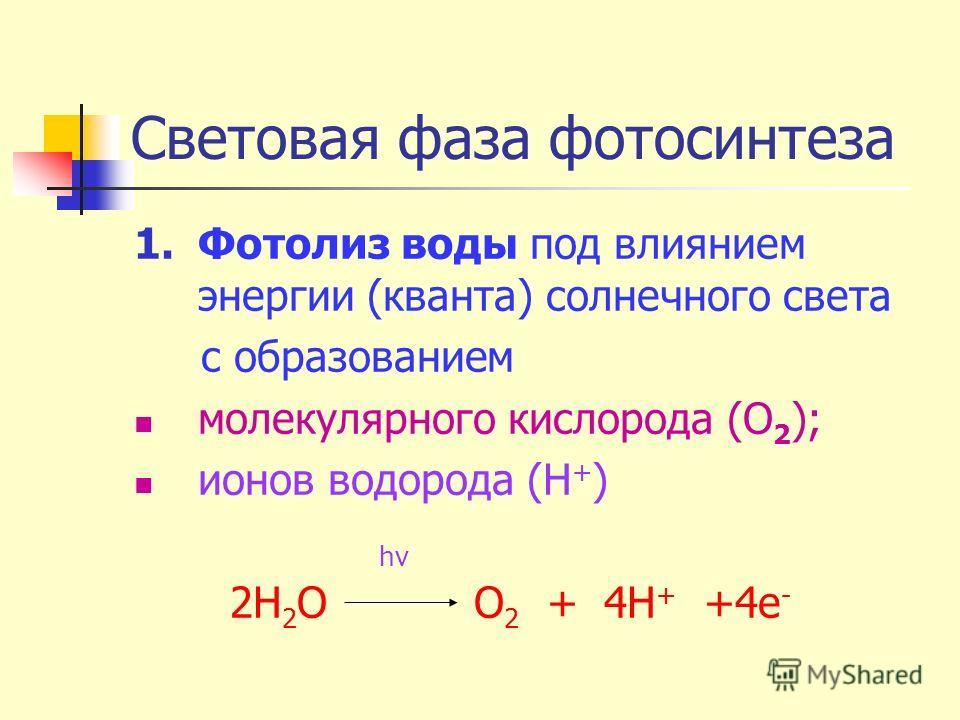 Световая фаза фотосинтеза 1.Фотолиз воды под влиянием энергии (кванта) солнечного света с образованием молекулярного кислорода (О 2 ); ионов водорода (Н + ) hv 2Н 2 O О 2 + 4Н + +4е -