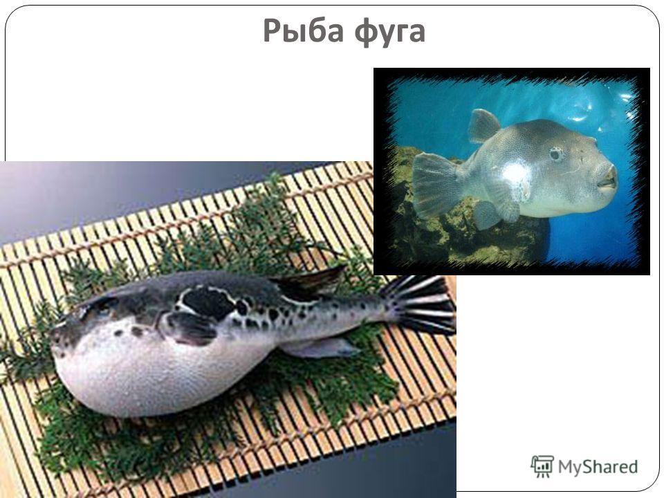 Рыба фуга