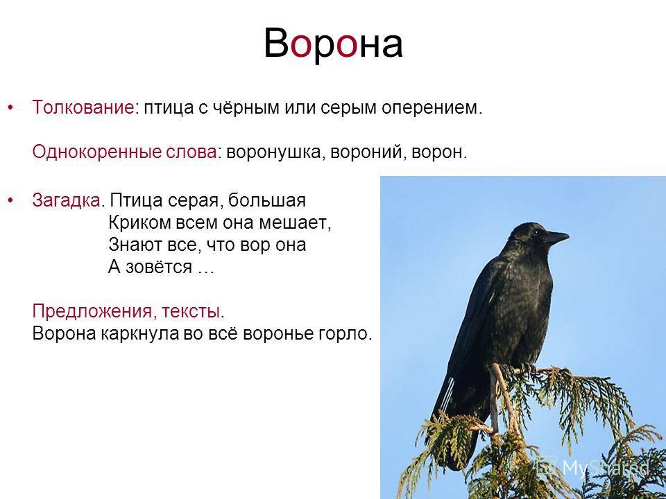 Ворона Толкование: птица с чёрным или серым оперением. Однокоренные слова: воронушка, вороний, ворон. Загадка. Птица серая, большая Криком всем она мешает, Знают все, что вор она А зовётся … Предложения, тексты. Ворона каркнула во всё воронье горло.
