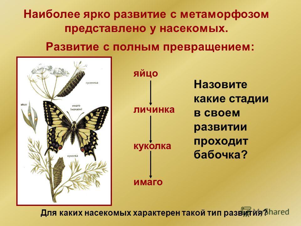 Наиболее ярко развитие с метаморфозом представлено у насекомых. Развитие с полным превращением: яйцо личинка куколка имаго Для каких насекомых характерен такой тип развития? Назовите какие стадии в своем развитии проходит бабочка?