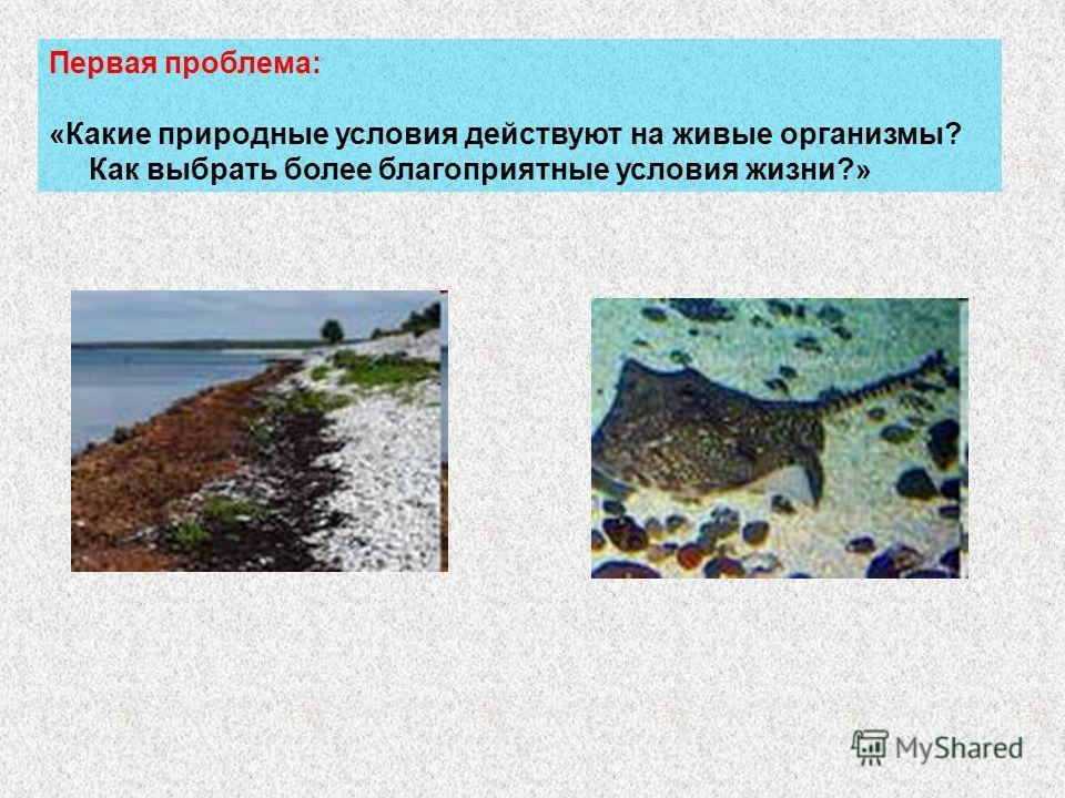 Первая проблема: «Какие природные условия действуют на живые организмы? Как выбрать более благоприятные условия жизни?»