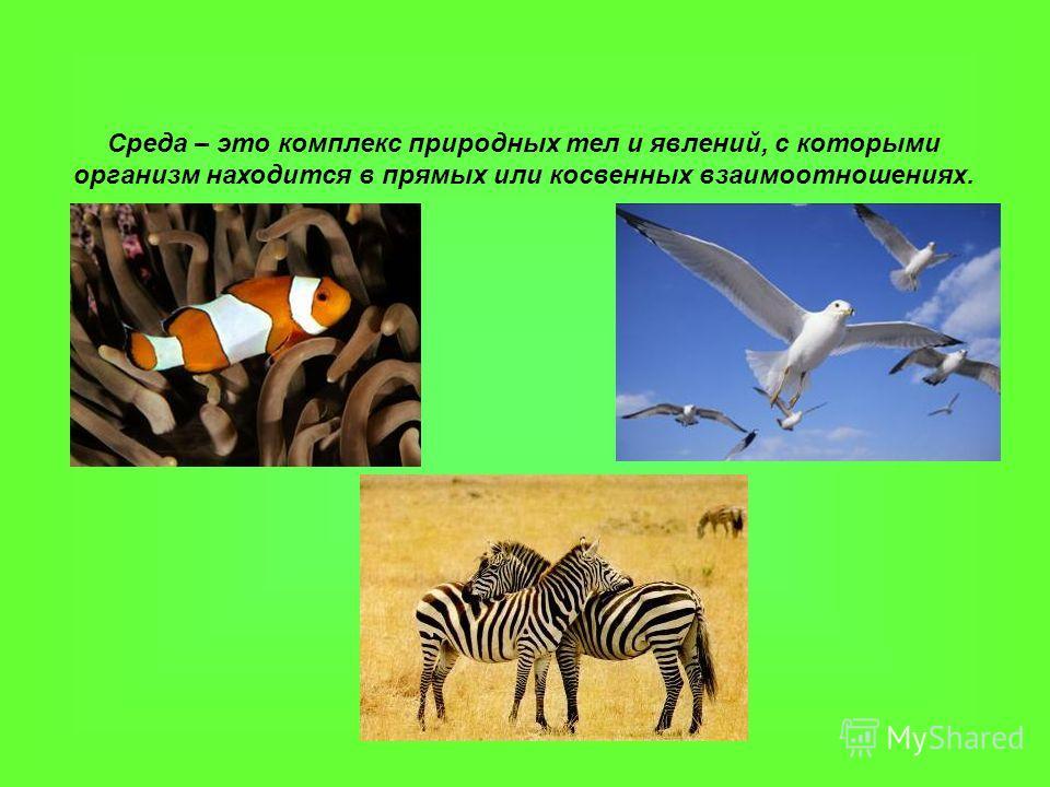 Среда – это комплекс природных тел и явлений, с которыми организм находится в прямых или косвенных взаимоотношениях.