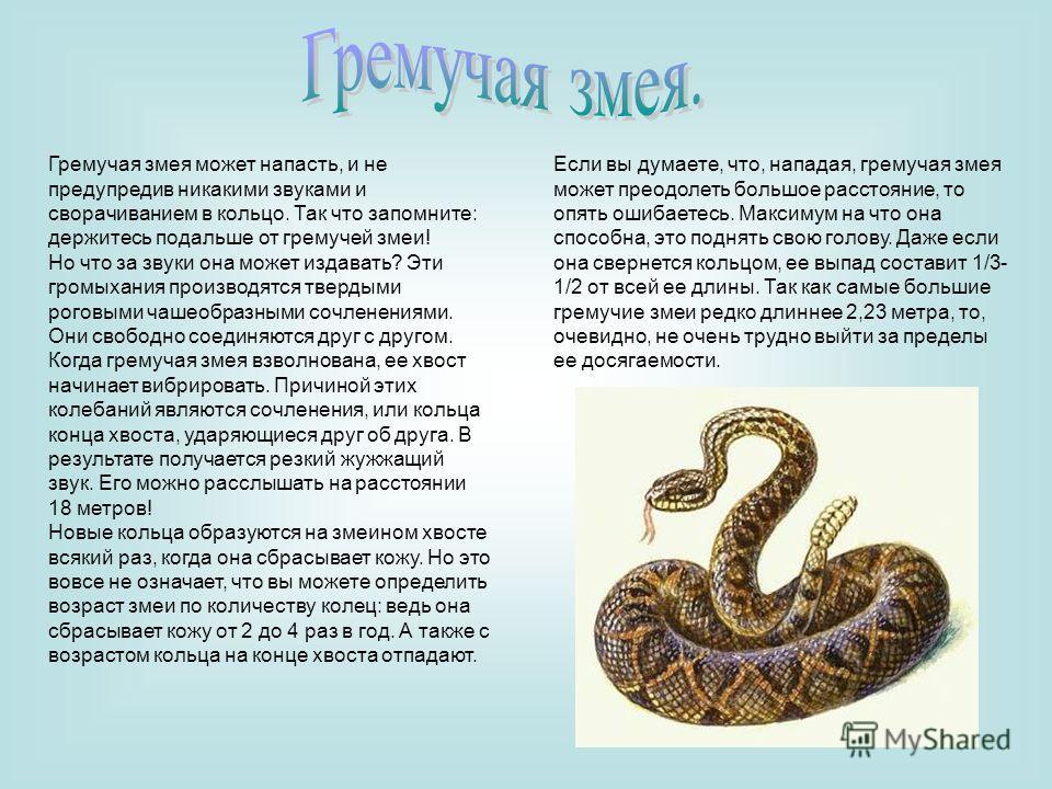 Гремучая змея может напасть, и не предупредив никакими звуками и сворачиванием в кольцо. Так что запомните: держитесь подальше от гремучей змеи! Но что за звуки она может издавать? Эти громыхания производятся твердыми роговыми чашеобразными сочленени