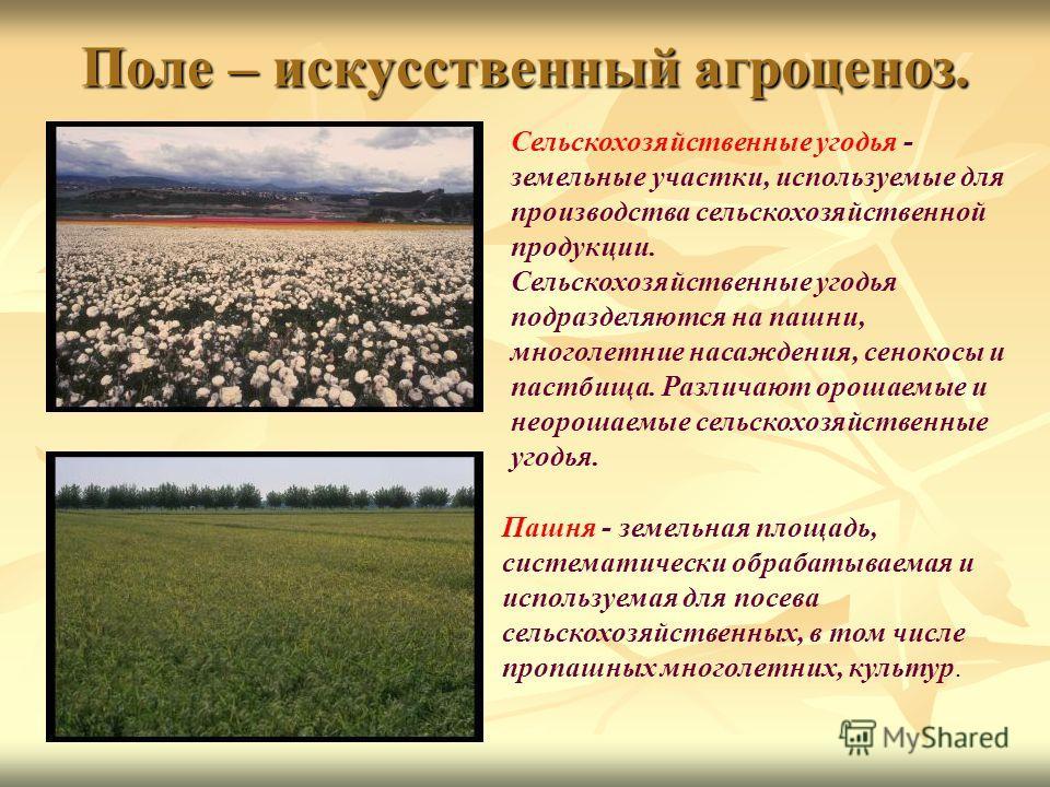 Поле – искусственный агроценоз. Сельскохозяйственные угодья - земельные участки, используемые для производства сельскохозяйственной продукции. Сельскохозяйственные угодья подразделяются на пашни, многолетние насаждения, сенокосы и пастбища. Различают