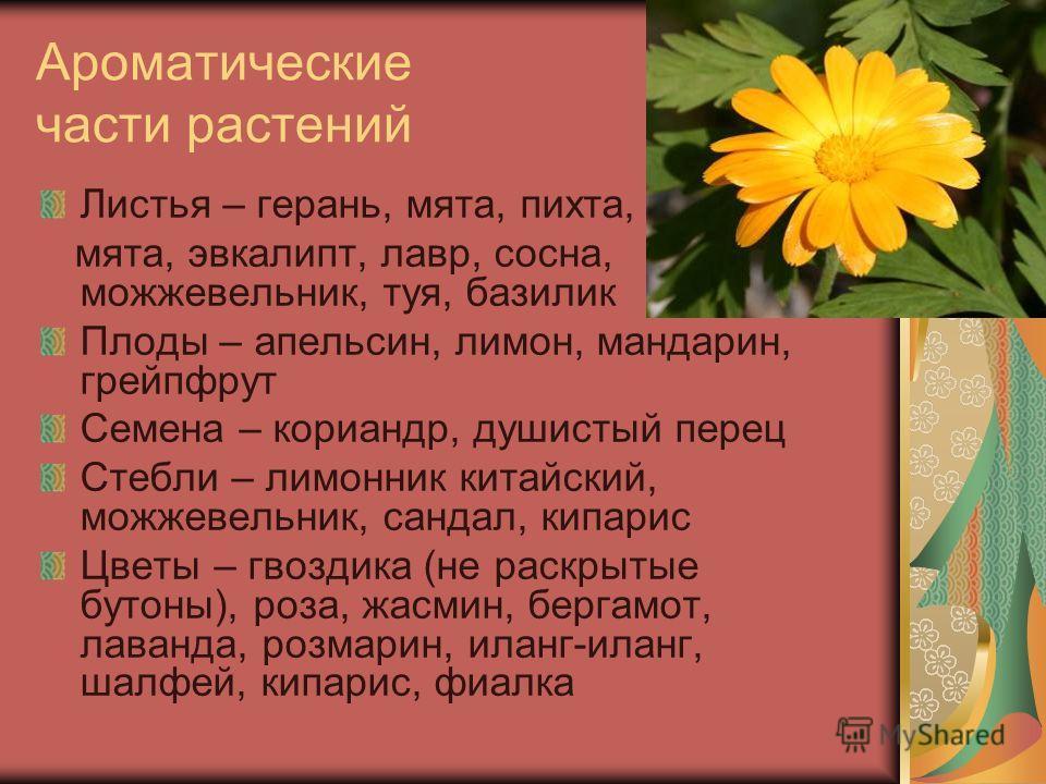 Ароматические части растений Листья – герань, мята, пихта, мята, эвкалипт, лавр, сосна, можжевельник, туя, базилик Плоды – апельсин, лимон, мандарин, грейпфрут Семена – кориандр, душистый перец Стебли – лимонник китайский, можжевельник, сандал, кипар