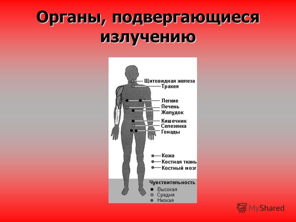 Органы, подвергающиеся излучению