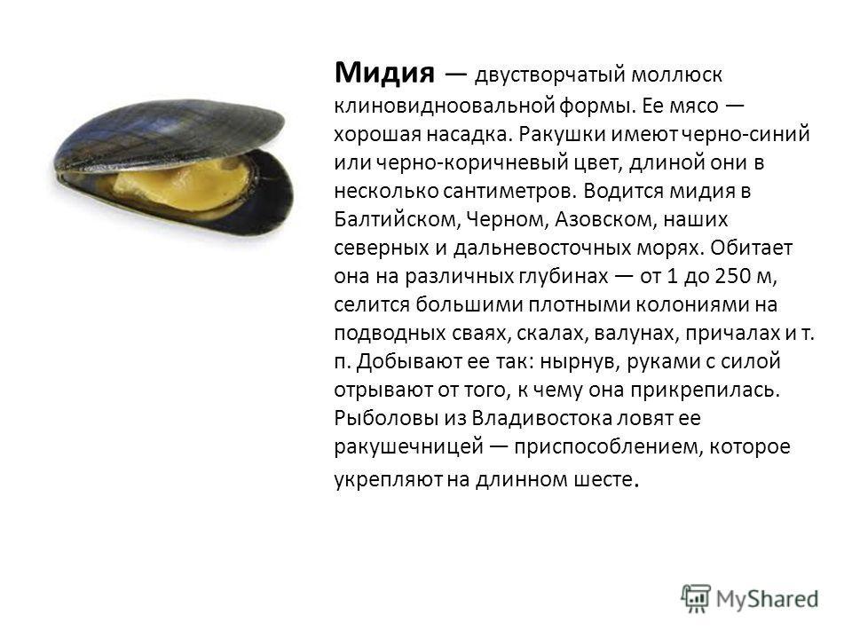 Мидия двустворчатый моллюск клиновидноовальной формы. Ее мясо хорошая насадка. Ракушки имеют черно-синий или черно-коричневый цвет, длиной они в несколько сантиметров. Водится мидия в Балтийском, Черном, Азовском, наших северных и дальневосточных мор