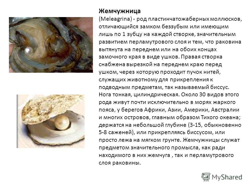 Жемчужница (Meleagrina) - poд пластинчатожаберных моллюсков, отличающийся замком беззубым или имеющим лишь по 1 зубцу на каждой створке, значительным развитием перламутрового слоя и тем, что раковина вытянута на переднем или на обоих концах замочного