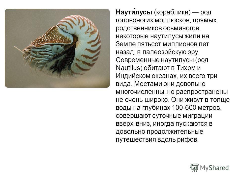 Наути́лусы (кораблики) род головоногих моллюсков, прямых родственников осьминогов, некоторые наутилусы жили на Земле пятьсот миллионов лет назад, в палеозойскую эру. Современные наутилусы (род Nautilus) обитают в Тихом и Индийском океанах, их всего т