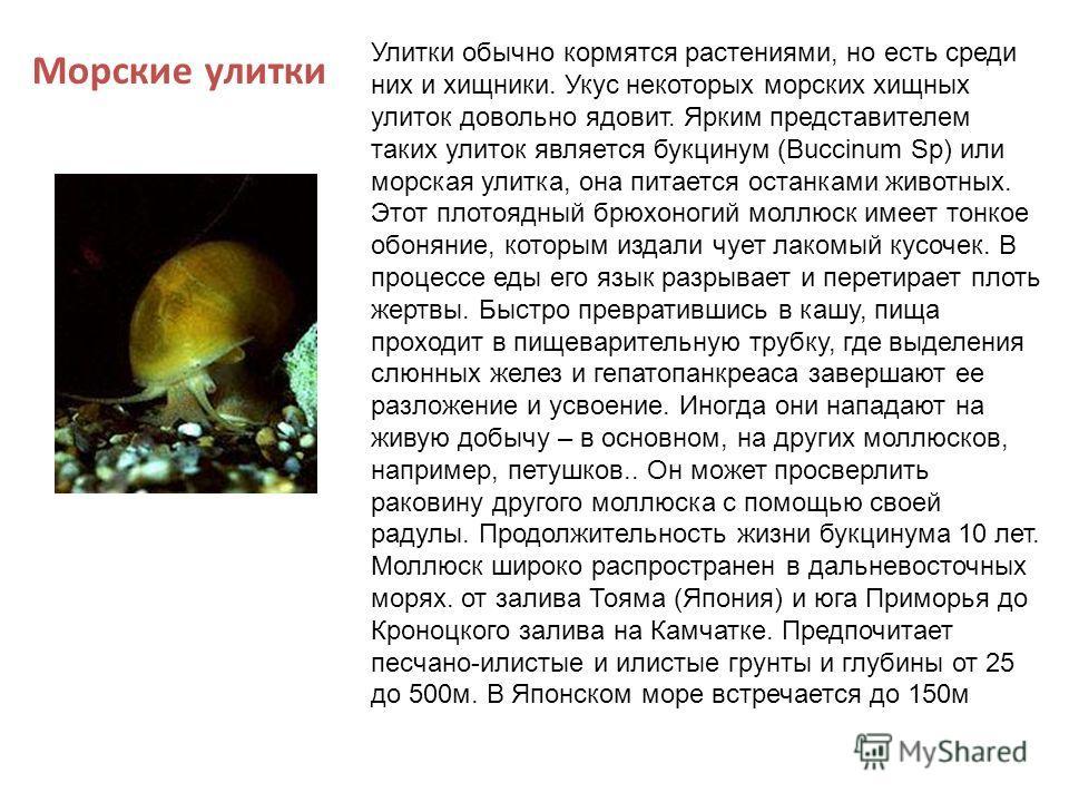 Улитки обычно кормятся растениями, но есть среди них и хищники. Укус некоторых морских хищных улиток довольно ядовит. Ярким представителем таких улиток является букцинум (Buccinum Sp) или морская улитка, она питается останками животных. Этот плотоядн