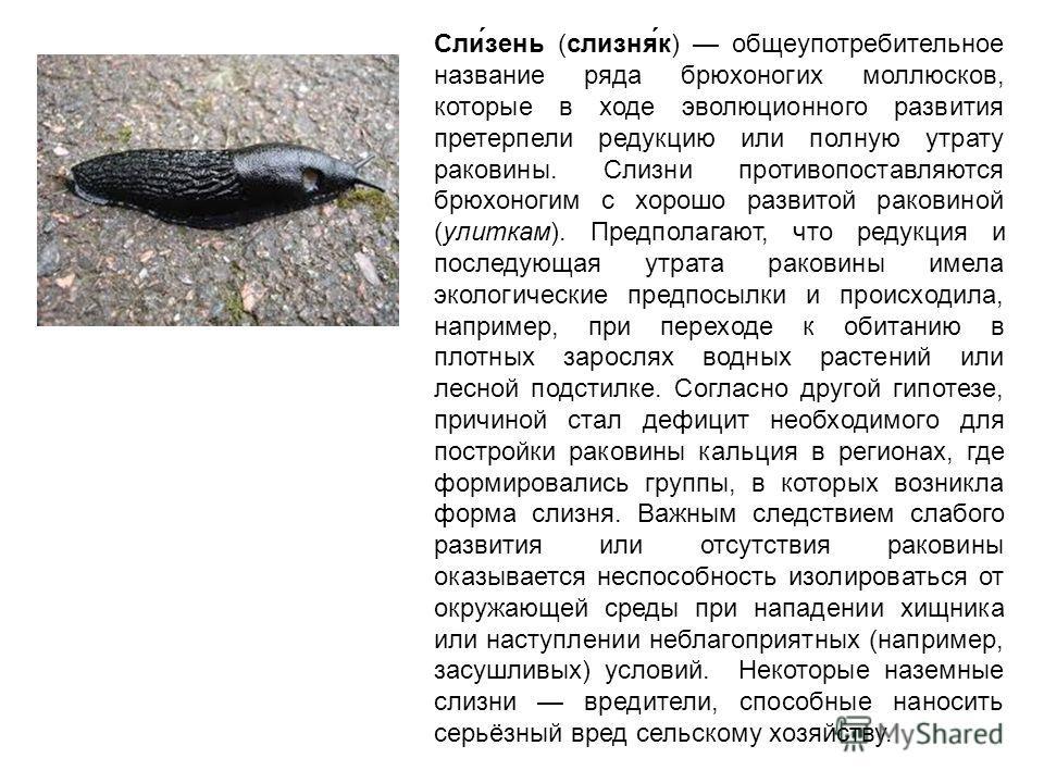 Сли́зень (слизня́к) общеупотребительное название ряда брюхоногих моллюсков, которые в ходе эволюционного развития претерпели редукцию или полную утрату раковины. Слизни противопоставляются брюхоногим с хорошо развитой раковиной (улиткам). Предполагаю