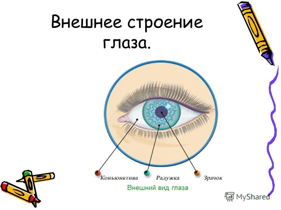 Внешнее строение глаза.