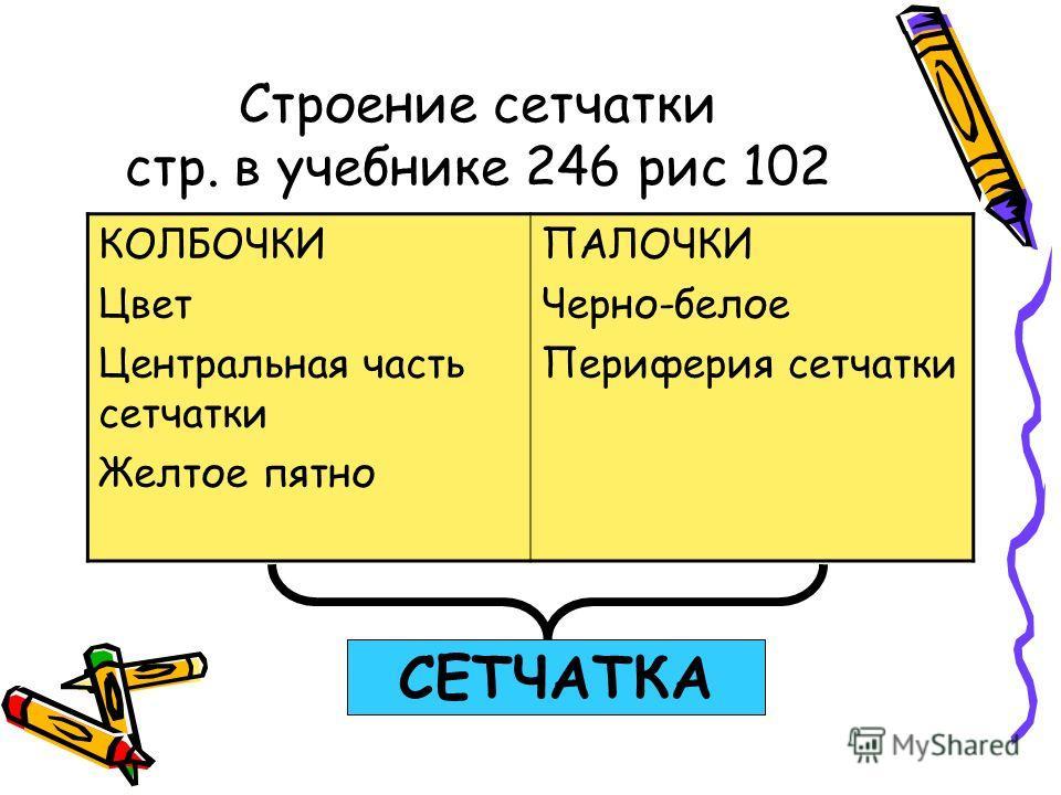 Строение сетчатки стр. в учебнике 246 рис 102 КОЛБОЧКИ Цвет Центральная часть сетчатки Желтое пятно ПАЛОЧКИ Черно-белое Периферия сетчатки СЕТЧАТКА