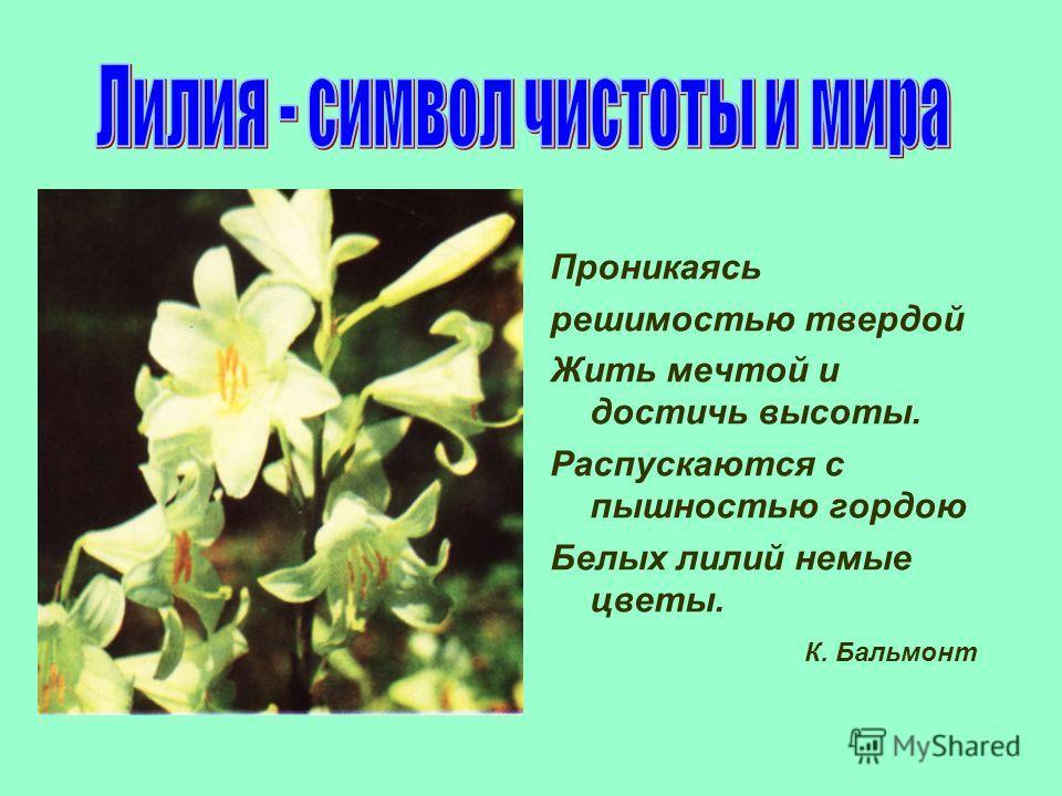 Проникаясь решимостью твердой Жить мечтой и достичь высоты. Распускаются с пышностью гордою Белых лилий немые цветы. К. Бальмонт