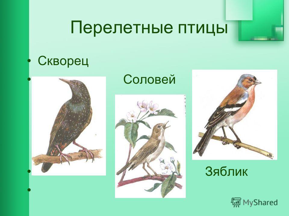 Перелетные птицы Скворец Соловей Зяблик