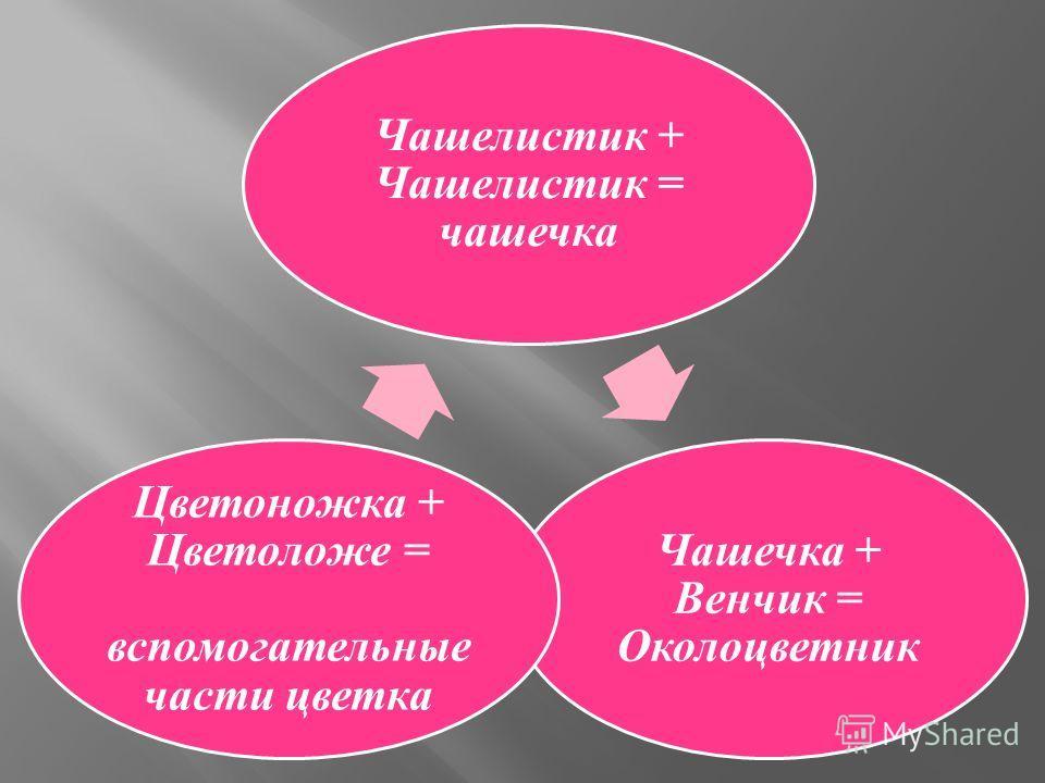 Чашелистик + Чашелистик = чашечка Чашечка + Венчик = Околоцветник Цветоножка + Цветоложе = вспомогательные части цветка