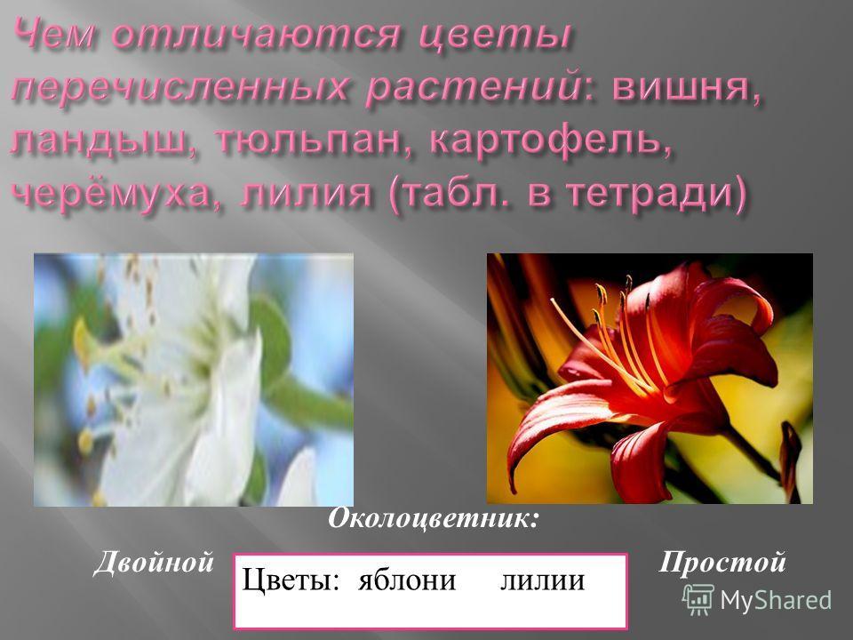 Околоцветник : Двойной Простой Цветы: яблони лилии
