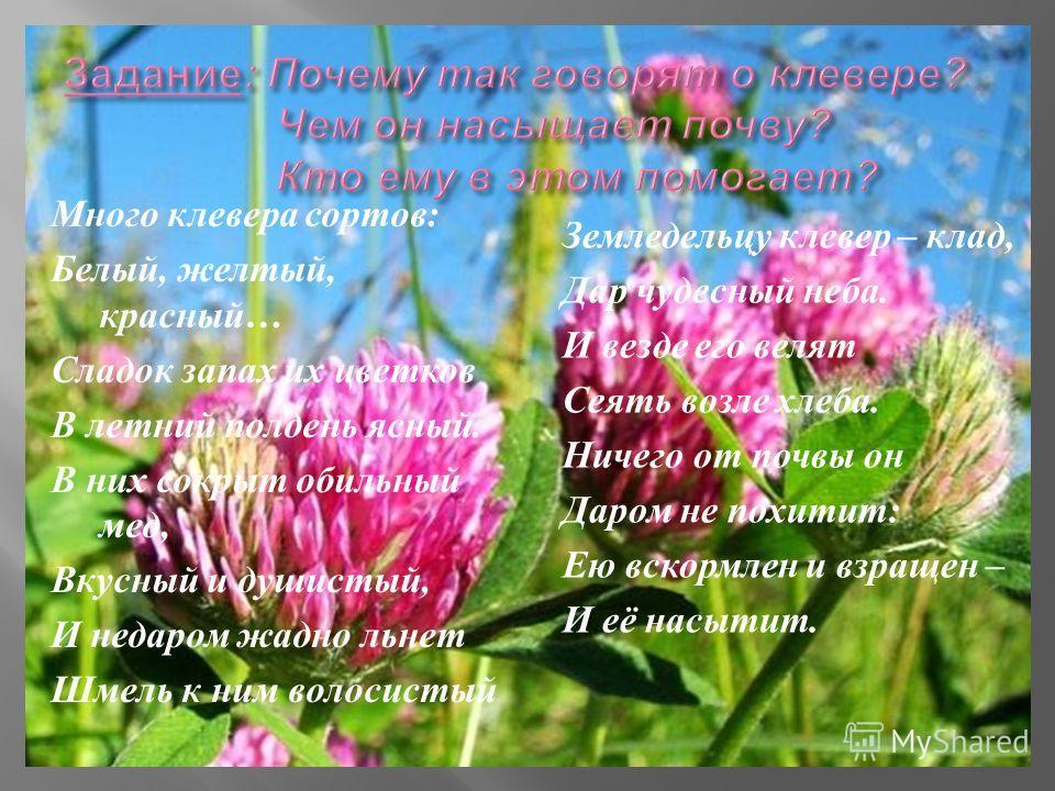 Много клевера сортов : Белый, желтый, красный … Сладок запах их цветков В летний полдень ясный. В них сокрыт обильный мед, Вкусный и душистый, И недаром жадно льнет Шмель к ним волосистый Земледельцу клевер – клад, Дар чудесный неба. И везде его веля