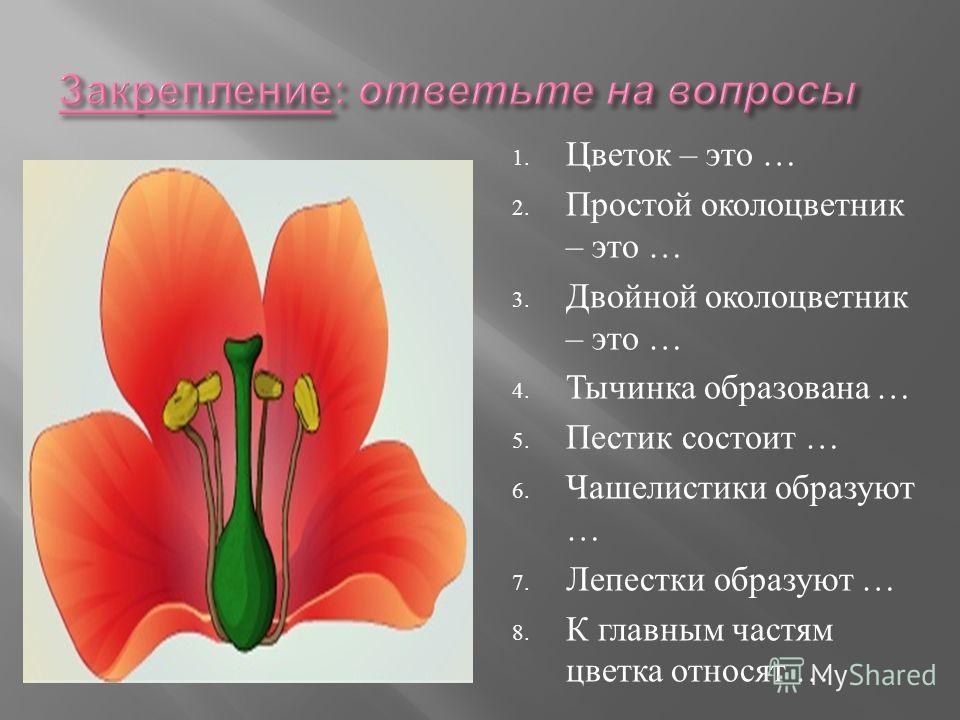 1. Цветок – это … 2. Простой околоцветник – это … 3. Двойной околоцветник – это … 4. Тычинка образована … 5. Пестик состоит … 6. Чашелистики образуют … 7. Лепестки образуют … 8. К главным частям цветка относят …