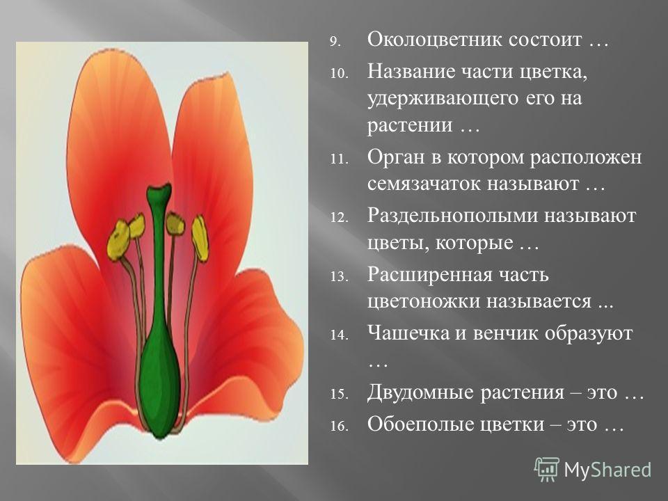 9. Околоцветник состоит … 10. Название части цветка, удерживающего его на растении … 11. Орган в котором расположен семязачаток называют … 12. Раздельнополыми называют цветы, которые … 13. Расширенная часть цветоножки называется... 14. Чашечка и венч