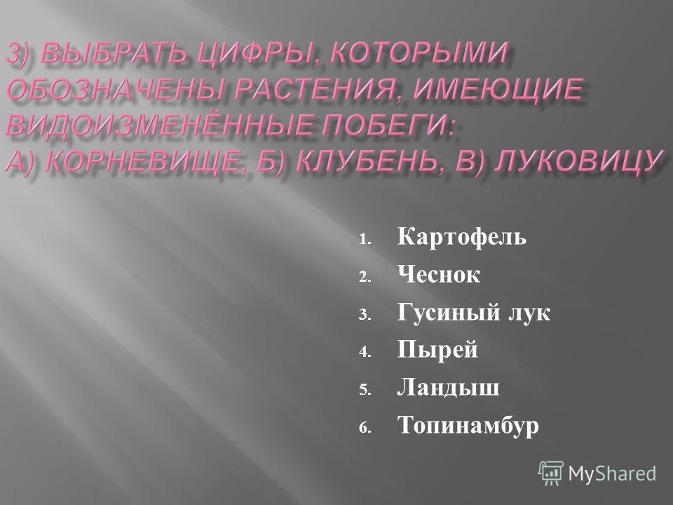 1. Картофель 2. Чеснок 3. Гусиный лук 4. Пырей 5. Ландыш 6. Топинамбур