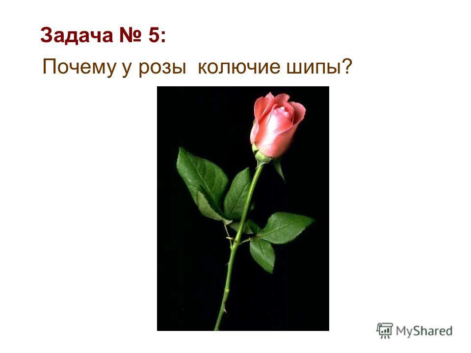 Почему у розы колючие шипы? Задача 5: