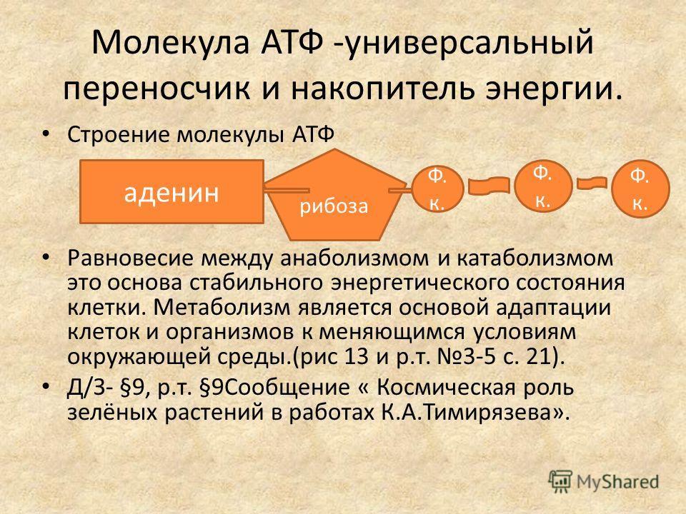 Молекула АТФ -универсальный переносчик и накопитель энергии. Строение молекулы АТФ Равновесие между анаболизмом и катаболизмом это основа стабильного энергетического состояния клетки. Метаболизм является основой адаптации клеток и организмов к меняющ