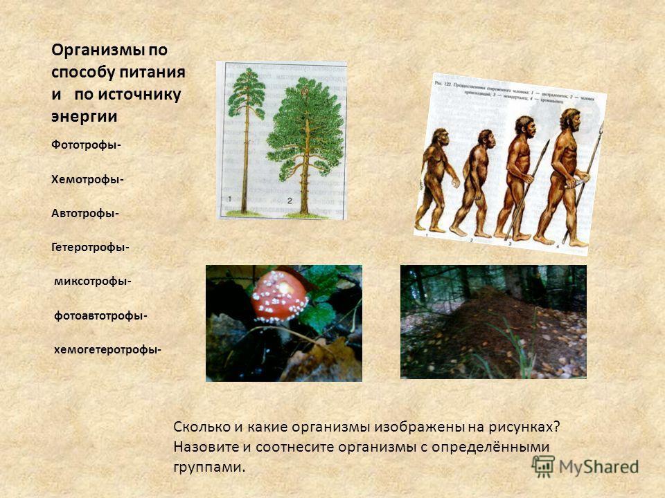 Организмы по способу питания и по источнику энергии Фототрофы- Хемотрофы- Автотрофы- Гетеротрофы- миксотрофы- фотоавтотрофы- хемогетеротрофы- Сколько и какие организмы изображены на рисунках? Назовите и соотнесите организмы с определёнными группами.