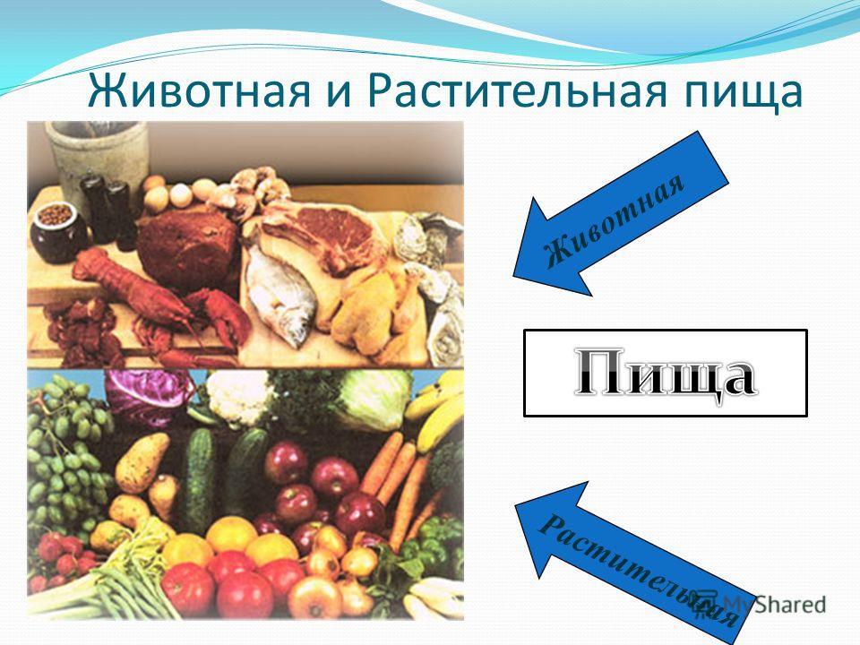 Животная и Растительная пища Р а с т и т е л ь н а я Ж и в о т н а я