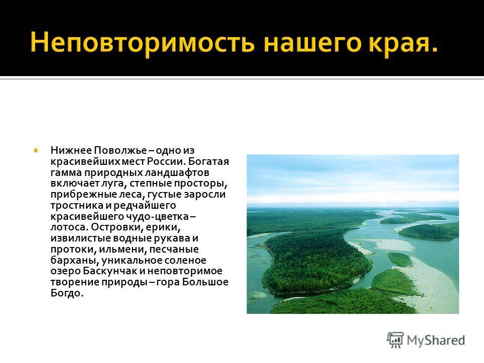 Нижнее Поволжье – одно из красивейших мест России. Богатая гамма природных ландшафтов включает луга, степные просторы, прибрежные леса, густые заросли тростника и редчайшего красивейшего чудо-цветка – лотоса. Островки, ерики, извилистые водные рукава