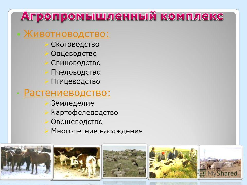 Животноводство: Скотоводство Овцеводство Свиноводство Пчеловодство Птицеводство Растениеводство: Земледелие Картофелеводство Овощеводство Многолетние насаждения