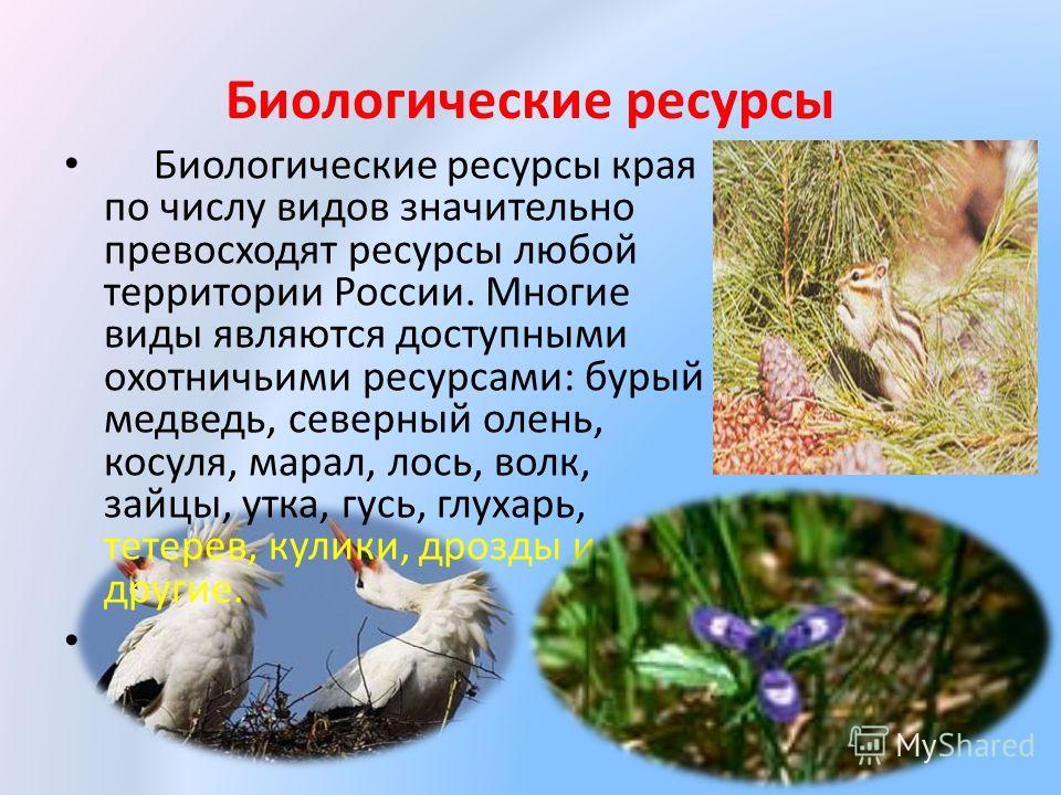 Биологические ресурсы Биологические ресурсы края по числу видов значительно превосходят ресурсы любой территории России. Многие виды являются доступными охотничьими ресурсами: бурый медведь, северный олень, косуля, марал, лось, волк, зайцы, утка, гус