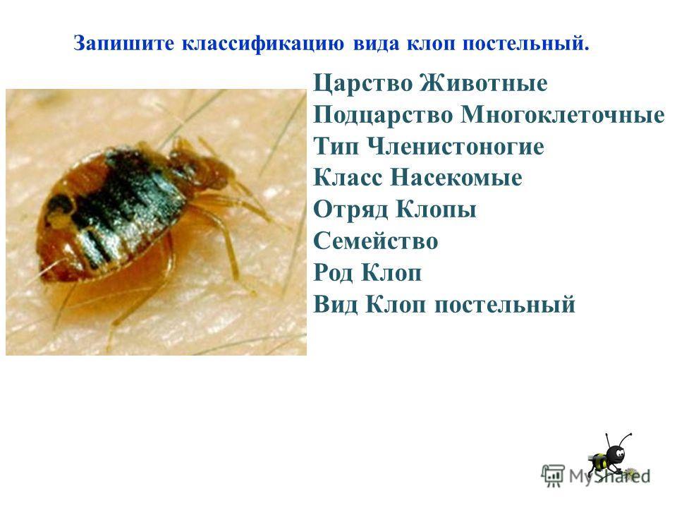 Запишите классификацию вида клоп постельный. Царство Животные Подцарство Многоклеточные Тип Членистоногие Класс Насекомые Отряд Клопы Семейство Род Клоп Вид Клоп постельный