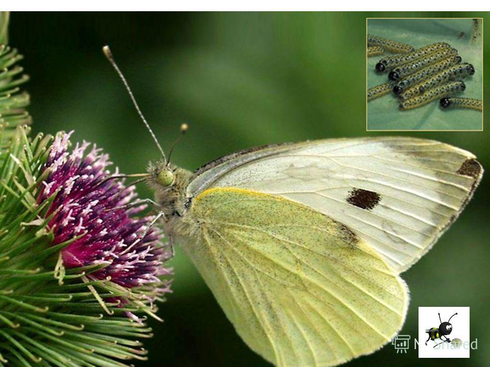 Какова роль насекомых в природе и для человека?