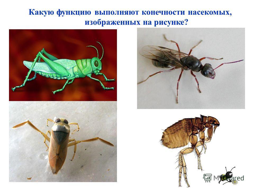 Какую функцию выполняют конечности насекомых, изображенных на рисунке?