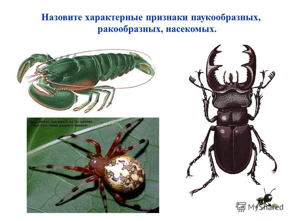 Назовите характерные признаки паукообразных, ракообразных, насекомых.