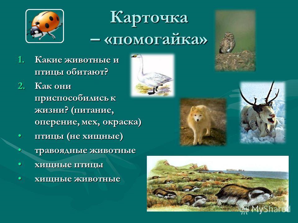 Карточка – «помогайка» 1.Какие животные и птицы обитают? 2.Как они приспособились к жизни? (питание, оперение, мех, окраска) птицы (не хищные)птицы (не хищные) травоядные животныетравоядные животные хищные птицыхищные птицы хищные животныехищные живо