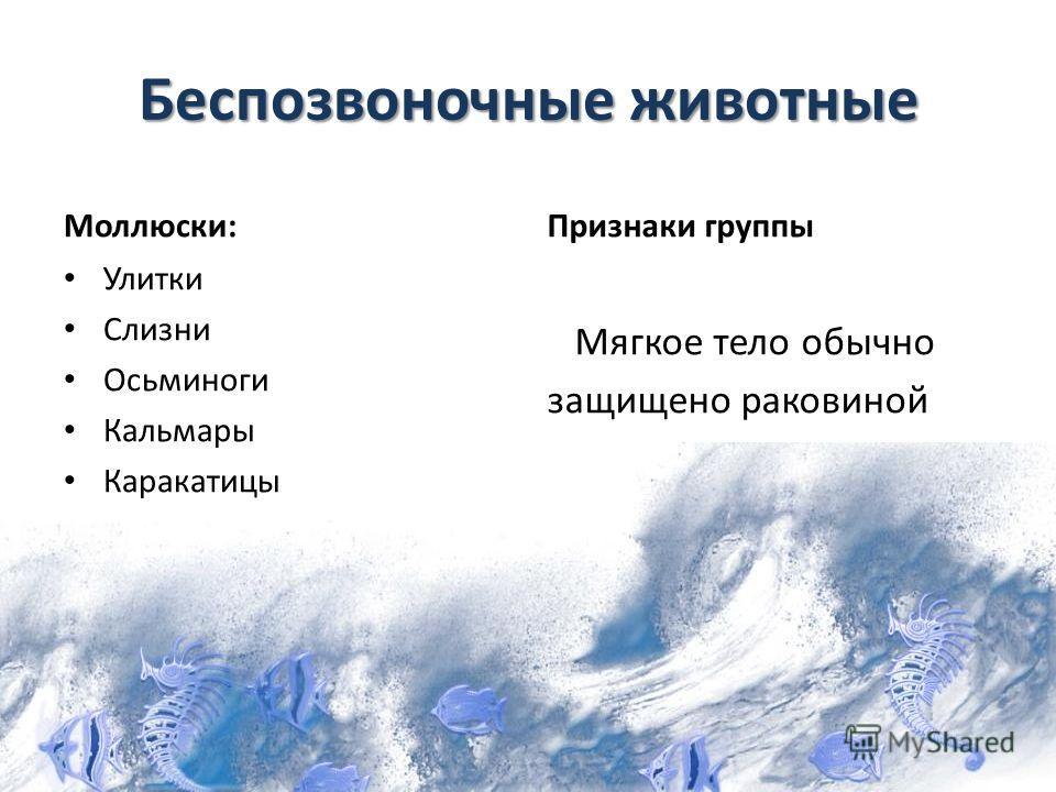 Беспозвоночные животные Моллюски: Улитки Слизни Осьминоги Кальмары Каракатицы Признаки группы Мягкое тело обычно защищено раковиной