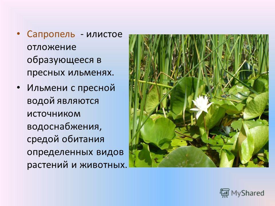 Сапропель - илистое отложение образующееся в пресных ильменях. Ильмени с пресной водой являются источником водоснабжения, средой обитания определенных видов растений и животных.
