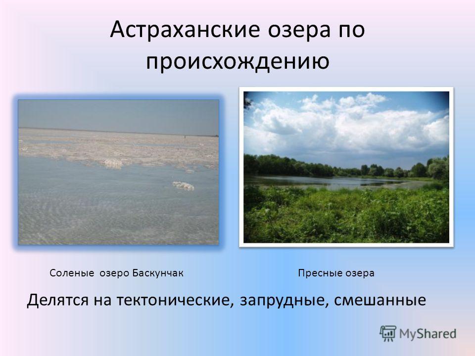 Астраханские озера по происхождению Делятся на тектонические, запрудные, смешанные Соленые озеро БаскунчакПресные озера