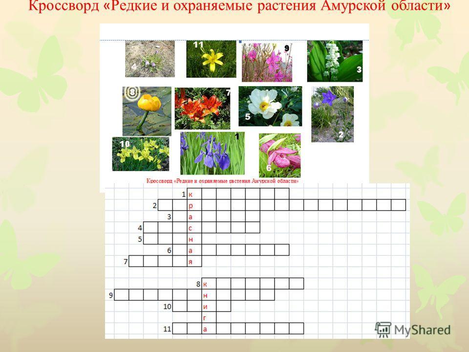 Кроссворд « Редкие и охраняемые растения Амурской области »